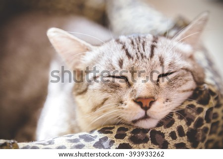 cat sleeping in the cat bed, vintage photo - stock photo