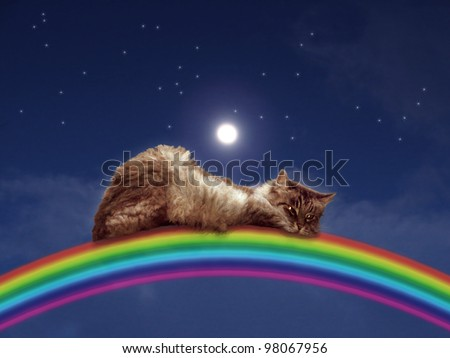 Cat sleeping on a rainbow with stars and moon and night sky. - stock photo