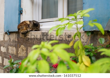 Cat sleeping on a window sill of a house - stock photo