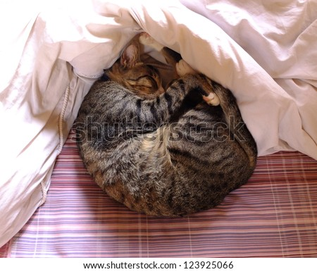Cat sleeping on bed with bed cover. - stock photo
