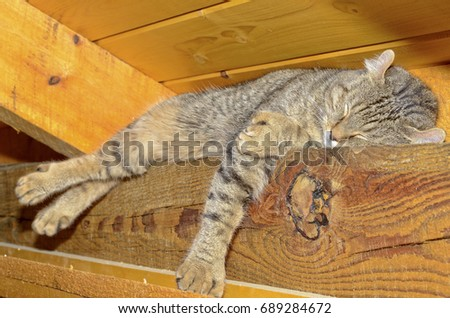 Cat sleeping on roof rafters, they can get almost anywhere.