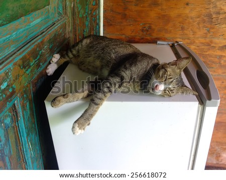 Cat sleeping on top of a fridge.