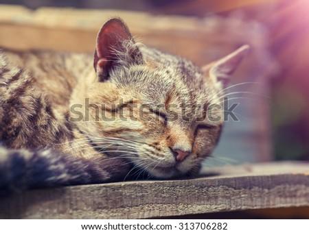 Cat sleeping outdoors - stock photo