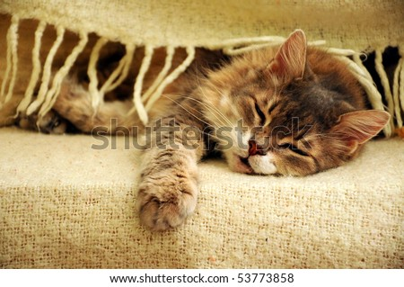 cat sleeping under blanket - stock photo