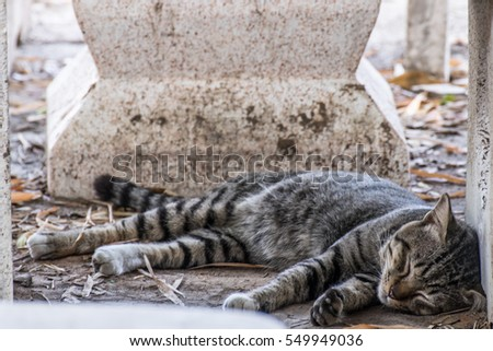 cat sleeping under table