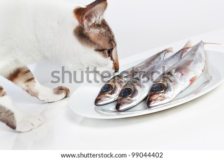 Cat smelling a fish on the table. In the kitchen. - stock photo