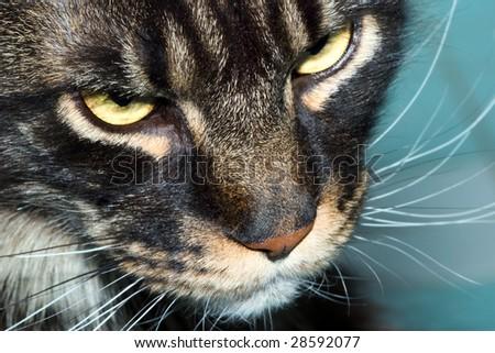 cat snout - stock photo