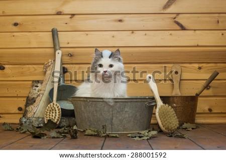 cat soared in the Russian bath - stock photo