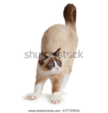 Cat stretching, isolated on white background - stock photo