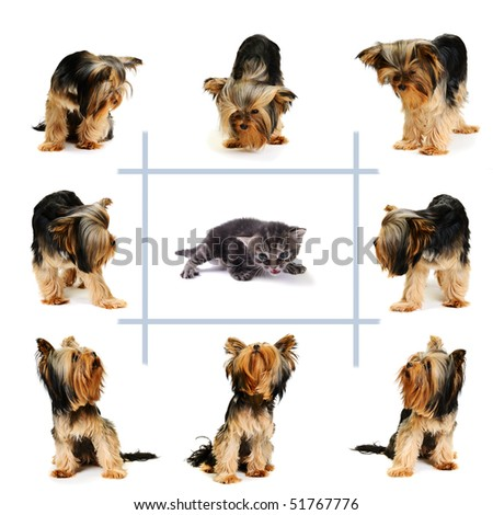 cat surrounded by dogs - stock photo