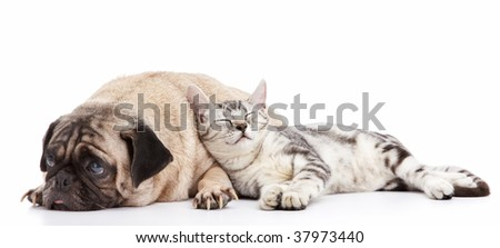 cat taking a nap leaning to the dog - stock photo