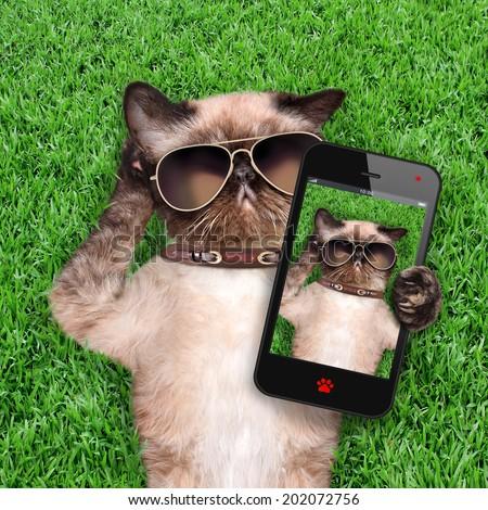 Cat taking a selfie. - stock photo