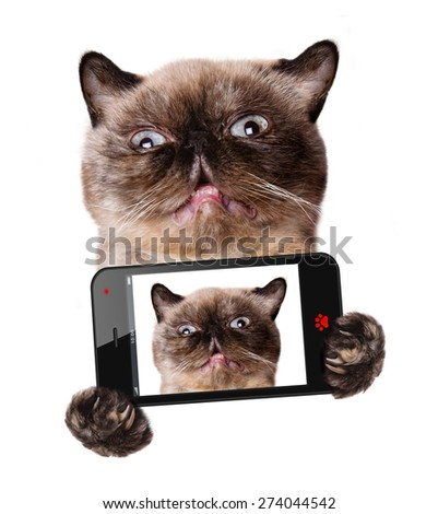 Cat taking a selfie with a smartphone - stock photo