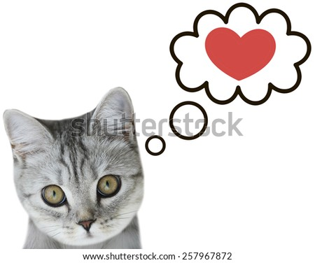 cat thinking about love - stock photo