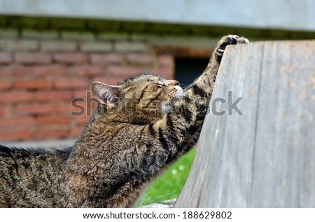 cat to sharpen claws - stock photo