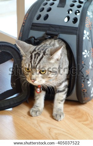 Cat Travel with Carrier Bag - stock photo