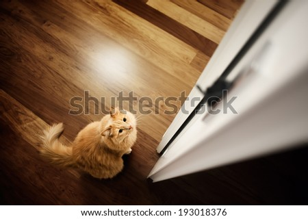 Cat trying to catch the mouse in the door - stock photo