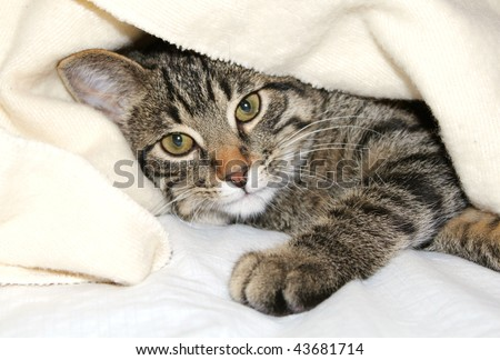 Cat under a blanket - stock photo