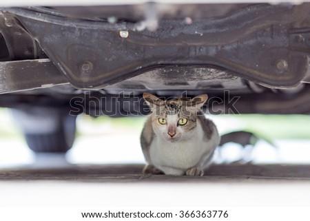 Cat under a car - stock photo
