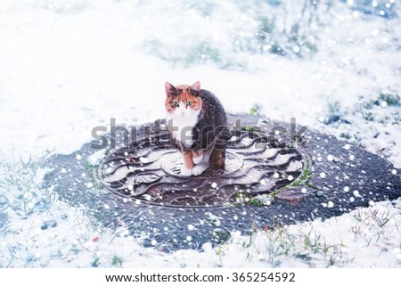 cat under a snowfall winter - stock photo