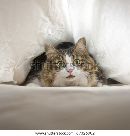 Cat Under Sheets - stock photo