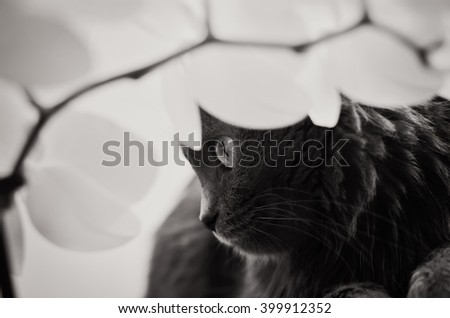 cat under the orchid (b&w) - stock photo