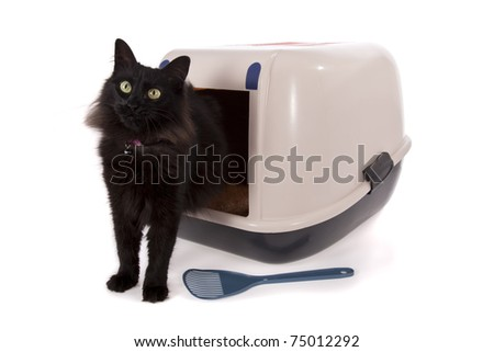 Cat using a closed litter box isolated on white background - stock photo