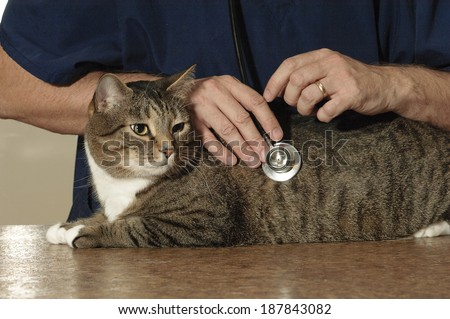 Cat Visits Veterinarian  - stock photo