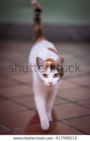 Cat walking towards me with blur background / Cat walking towards