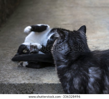 Cat want to play with another one. - stock photo