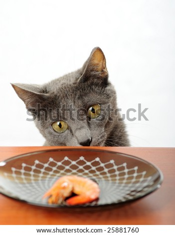 Cat wants to steal shrimp from the table