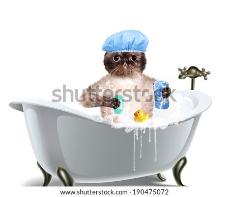 Cat washes - stock photo