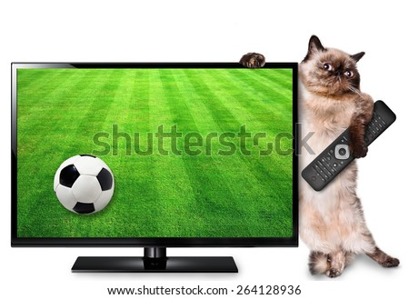 Cat watching smart tv translation of football game. - stock photo