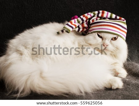 Cat wearing a cap