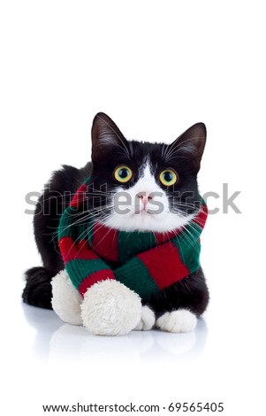 cat wearing a red and green scarf at its neck over white - stock photo