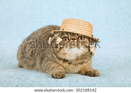 Cat wearing Australian straw hat with dangling cork props  - stock photo