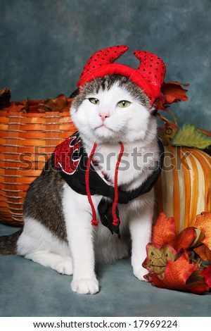 Cat Wearing Devil Halloween Costume - stock photo