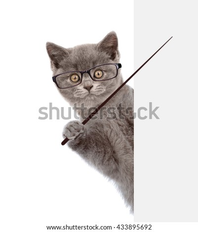Cat wearing glasses holding a pointing stick and points on empty banner. isolated on white background - stock photo