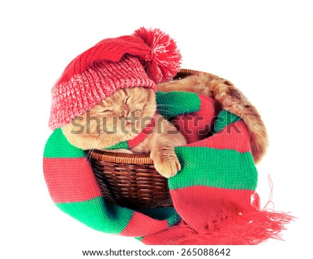 Cat wearing hat and scarf sleeping in a basket - stock photo