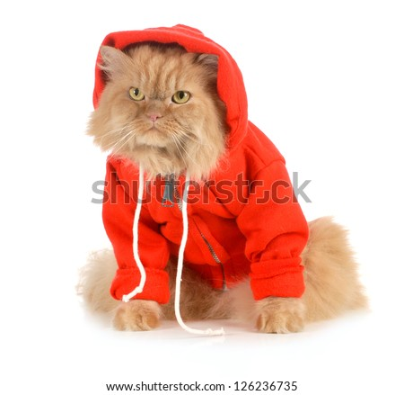 cat wearing red coat isolated on white background