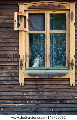 cat window - stock photo