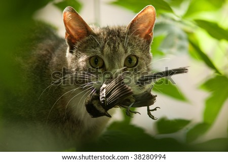 Cat with a bird in a teeth. - stock photo