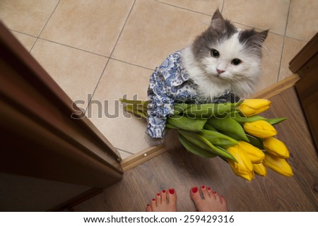 cat with a bouquet at the feet of mistress