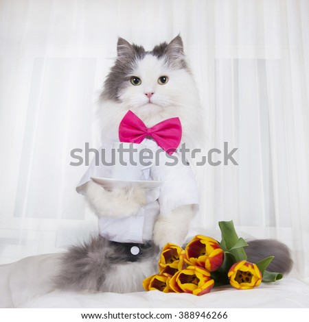 cat with a bouquet of tulips brought coffee in bed - stock photo
