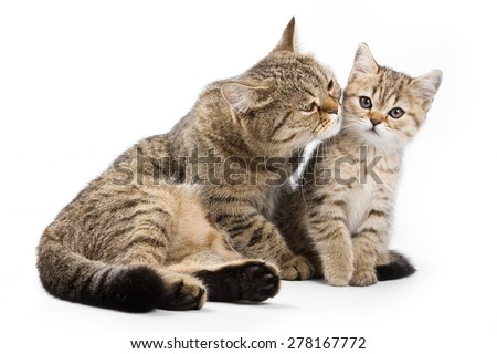 Cat with a cub (isolated on white)