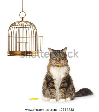 Cat with a full mouth sitting next to an empty bird cage - stock photo