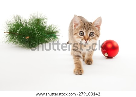 Cat with a new year ball and a pine tree twig - stock photo