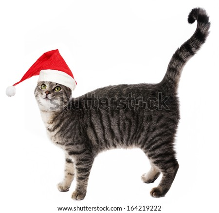 cat with a red santa cap - stock photo
