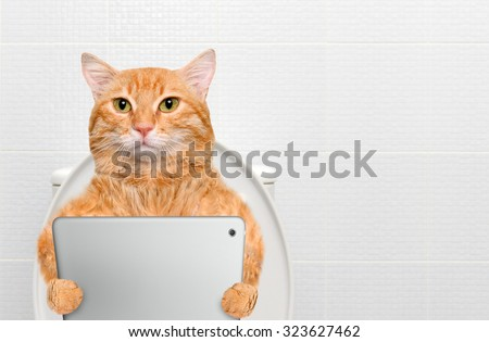 Cat with a tablet pc in a toilet. - stock photo