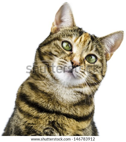 Cat with attentive gaze looking forwards - stock photo